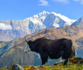 Khopra Khayar Lake Trek – Himalayan Frozen Adventure