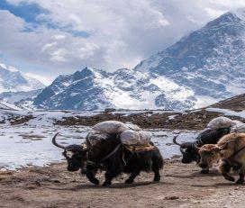 Everest Base Camp Trek – 14 Days
